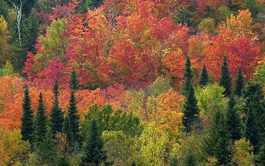 Near Pittsburg, New Hampshire (photo: AP)