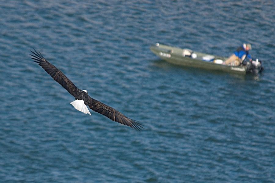 An eagle soars over a boat in South Dakota (AP photo)
