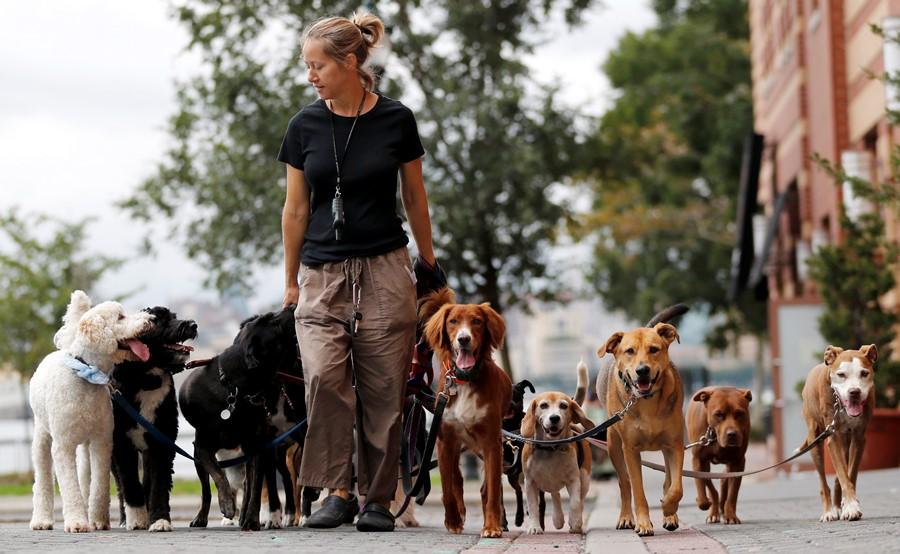 Dogs walking (photo: AP)