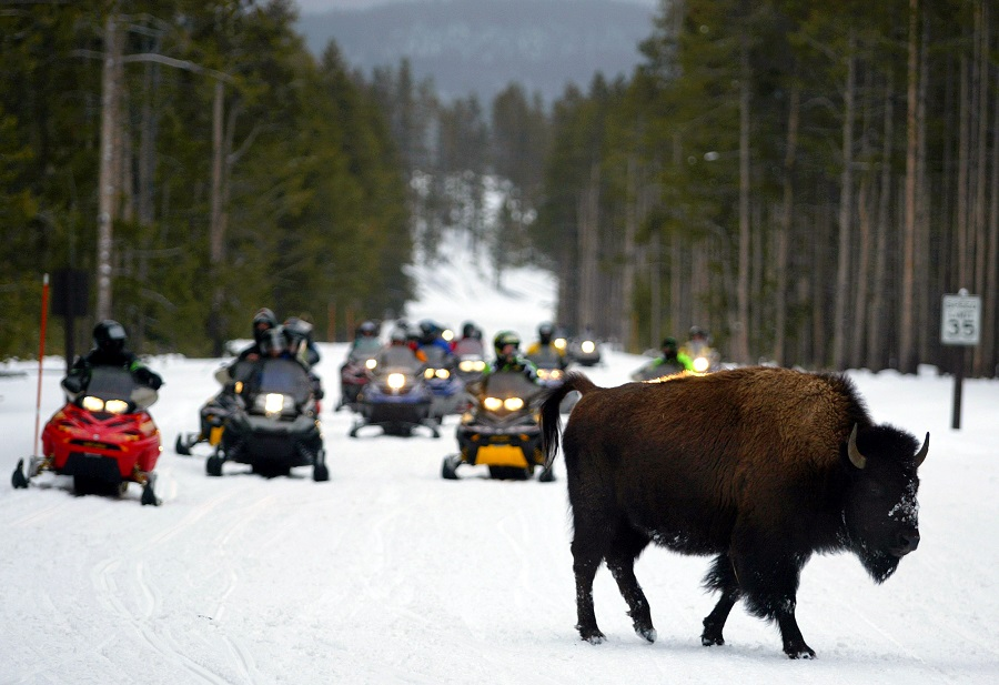 Buffalo in Yellowstone National Park in Wyoming (photo: AP)