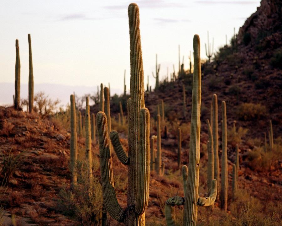Saguaro National Park , Tucson, AZ (photo: AP)