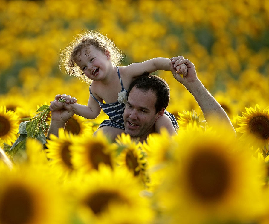 Father and daughter in sunflowers, Kansas (Photo: AP)