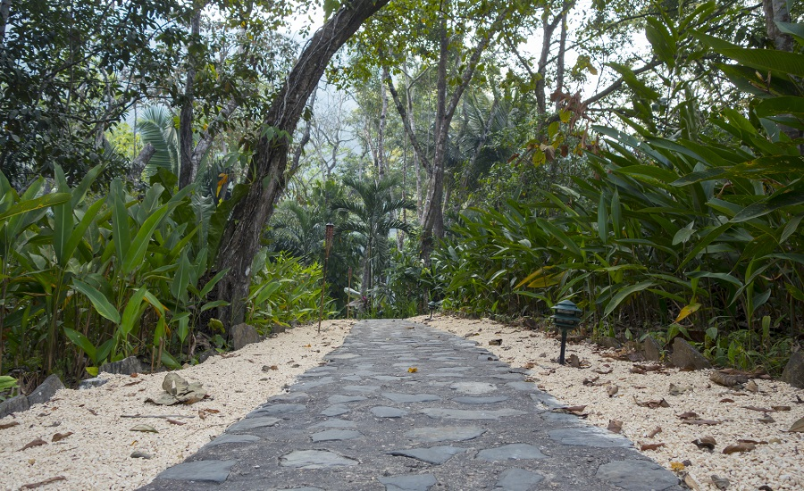 Belize jungle path (photo: Getty)