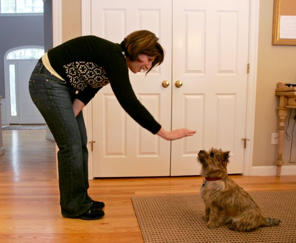 Tricia Griggs works on some obedience with her dog Tucker at her home in Sudbury, Mass., Wednesday, Jan. 7, 2009. (AP Photo/Mary Schwalm)