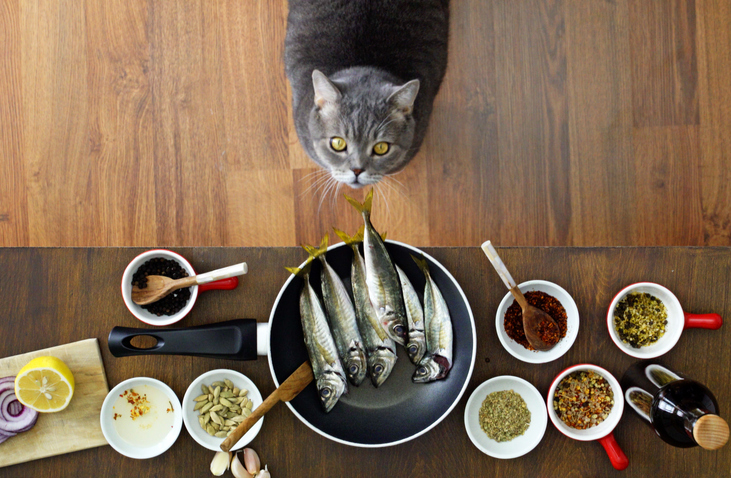 Cat with food