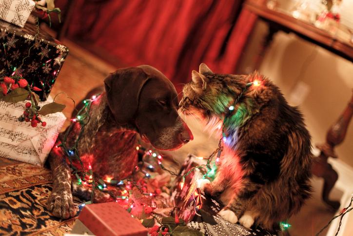Pets with Christmas lights