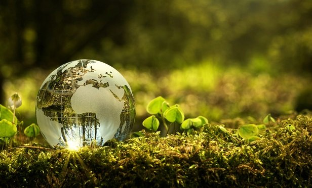 Glass globe on greenery