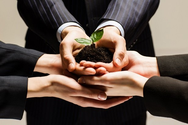 three people's hands holding a plant