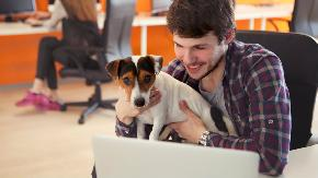 Dog friendly offices: What are the risks