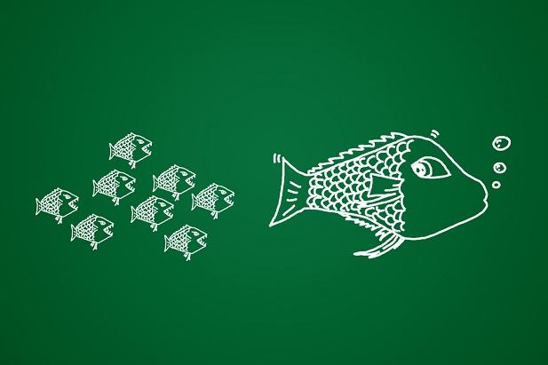 small fish chasing big fish on chalkboard drawing