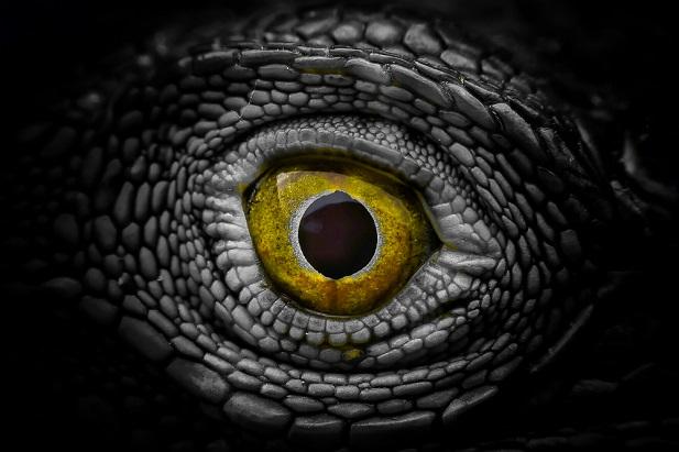 lizard alien eyeball