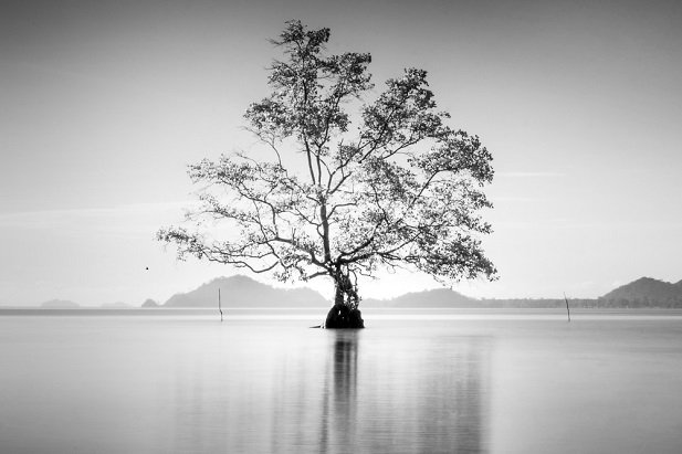 black and white image of tree in a vast expanse of water