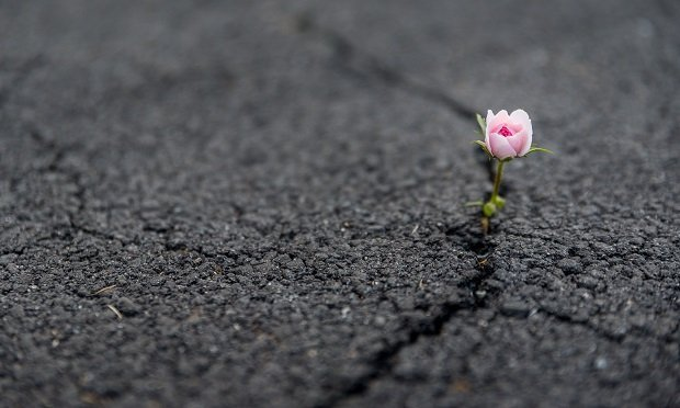 Flower growing out of pavement crack